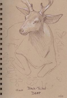 10_13_13_deer