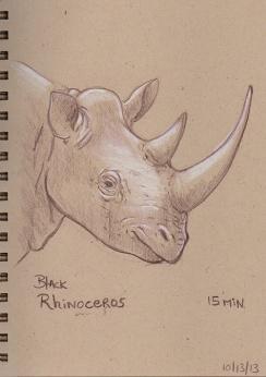 10_13_13_rhino