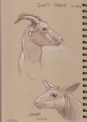10_13_13_sheep_okapi