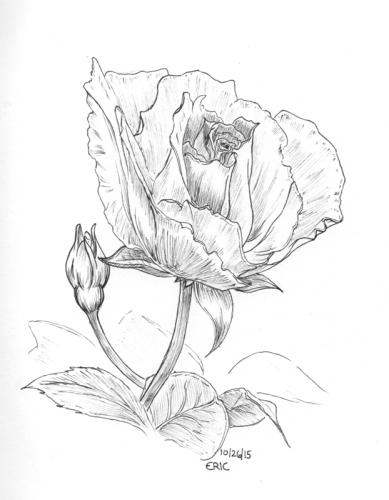 10_26_15_inktober_flower