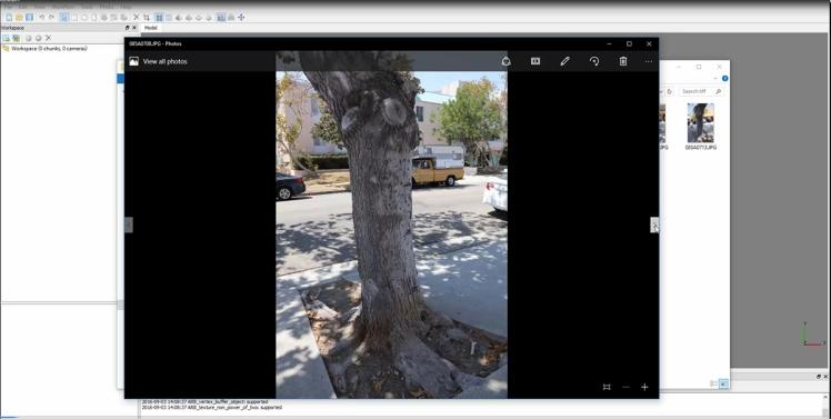 tree_photoscan2.jpg