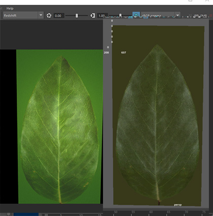 Redshift Leaves using Rayswitch and Sprite nodes – Studio EB
